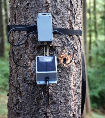 tree_talker